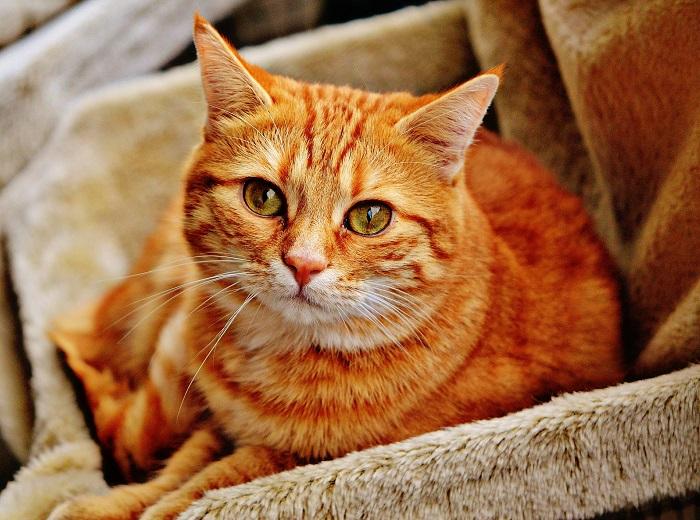 Deka a mačací domček pre mačky